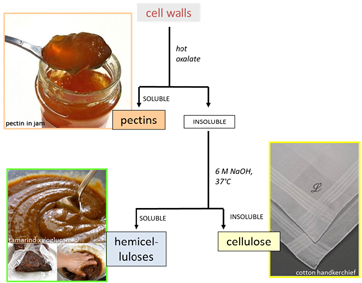 cell wall fractionation